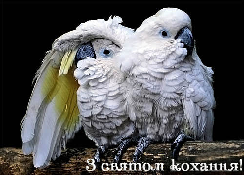 пісня сонячні крила слушать